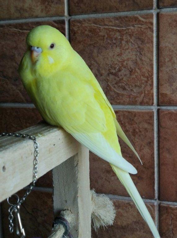 попугай получех фото также используется