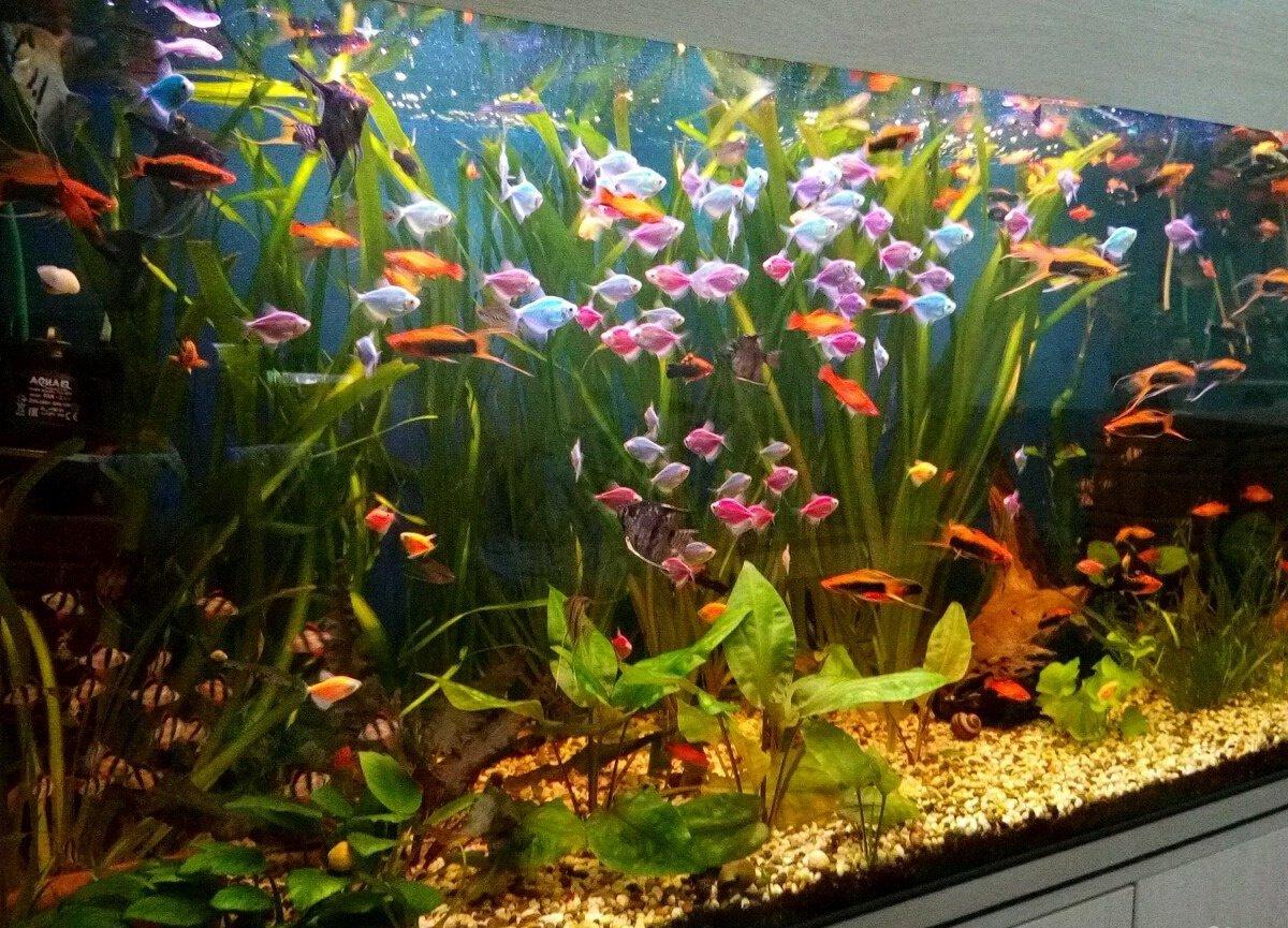еще аквариум с моллинезиями фото посуду