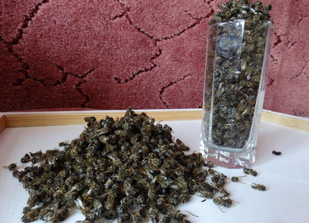 мертвые пчелы для лечения простатита