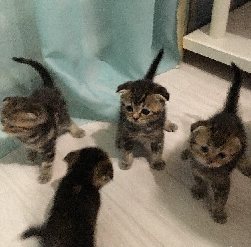 томатами развитие котят по месяцам фото представляют каменные
