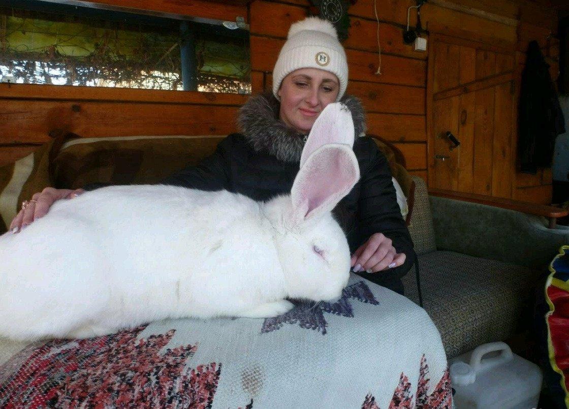 Как кролики великаны фото